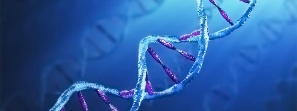 OSG · Cadena de Ácido Desoxirribo Nucleico.