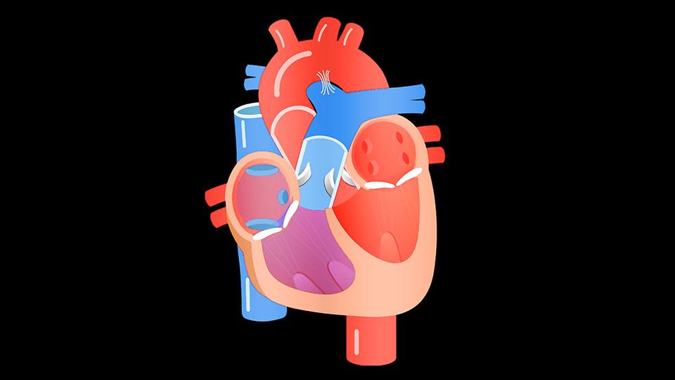 Heart Team de Valvulopatías Cardíacas San Gerónimo (HTV).